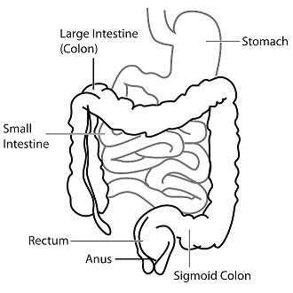 Salt water flush: illustration of colon